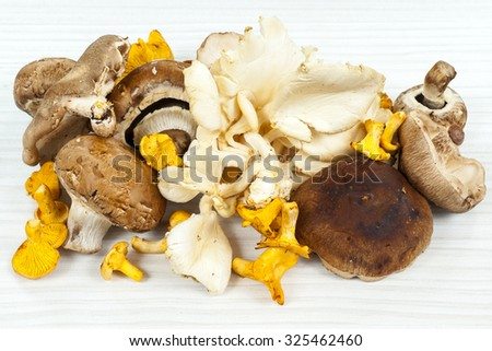 Wild Foraged Mushroom selection isolated on white background, with shadow. - stock photo