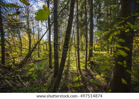 Wild forest. Fallen tree in the forest. Wild forest median strip europe.