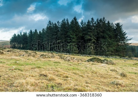Wild forest in Dartmoor PArk, UK at winter time - stock photo