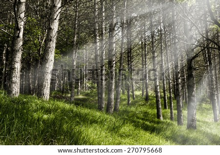 wild forest in spring in italy - stock photo