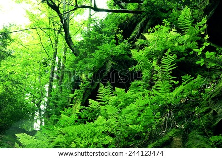 Wild forest with fern - stock photo