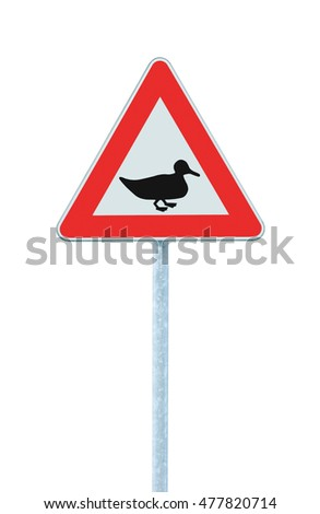 Wild Fowl Duck Crossing Ahead Warning Traffic Road Sign, Large Detailed Isolated Roadside Beware Of Wildlife Birds Signage Closeup, Triangular Roadsign Pole Post, Red Triangle Frame