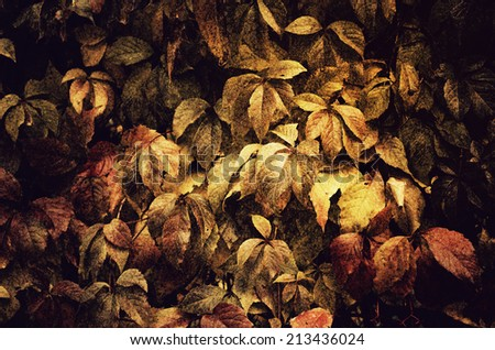 Wild grape leaves, natural grunge seasonal autumn vintage background - stock photo