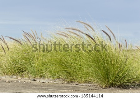 wild grass growing on some concrete with blue sky - stock photo