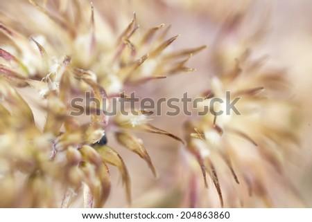 Wild grass macro - stock photo