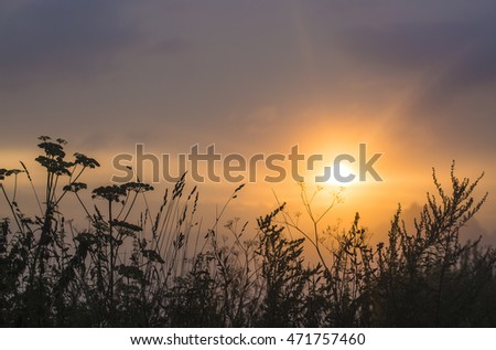 Wild grass silhouette against golden hour sky during sunset.