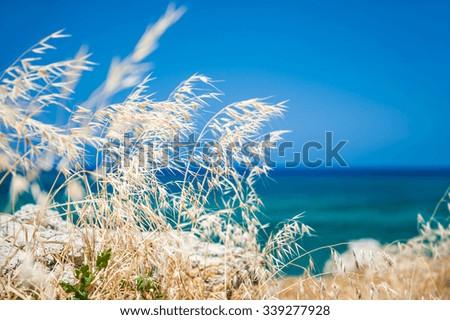 Wild grasses on the sea coast, Crete island, Greece. Beautiful summer landscape. Selective focus - stock photo
