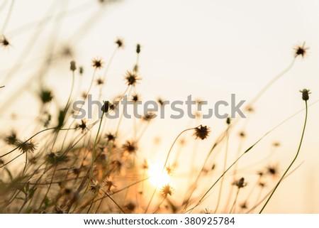 Wild grasses summer sunset - stock photo