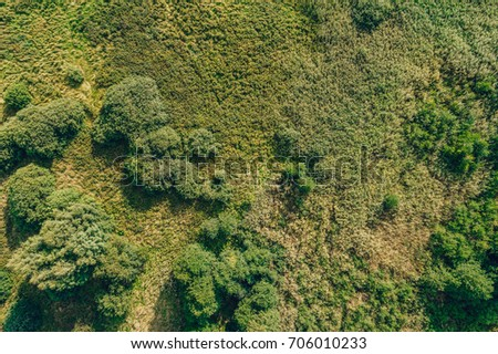 grass field from above. Wild Green Countryside Field From Above, Trees And Grass Above