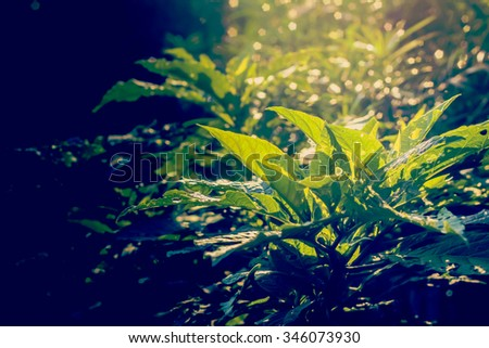 Wild green foliage in the jungle with soft focus ray light