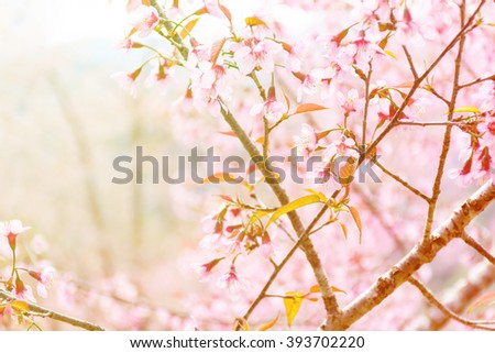 essay on spring seasons in hindi gymnosperms essay essay on spring seasons in hindi