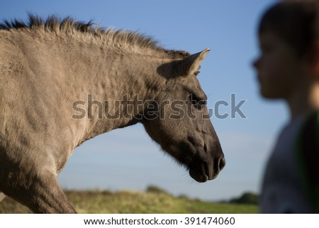 Wild horse and boy side view