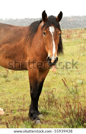 Wild horse in the American West, standing - stock photo