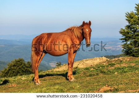 Wild horse on the hill, staring - stock photo