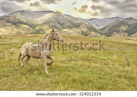 Wild horse running on pasture in Montana foothills,photo art - stock photo