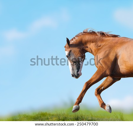 Wild horse runs closeup - stock photo