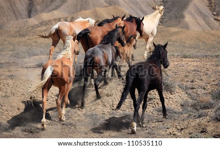 Wild Horse Stampede. The fierce energy of living freely captivated me. - stock photo