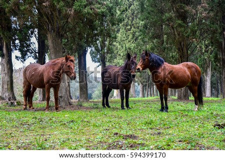 Wild horses and mules among the trees