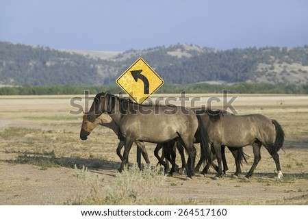 Wild horses crossing road in front of road sign at the Black Hills Wild Horse Sanctuary, the home to America's largest wild horse herd, Hot Springs, South Dakota - stock photo