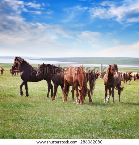 Wild horses in a field under a blue sky with clouds