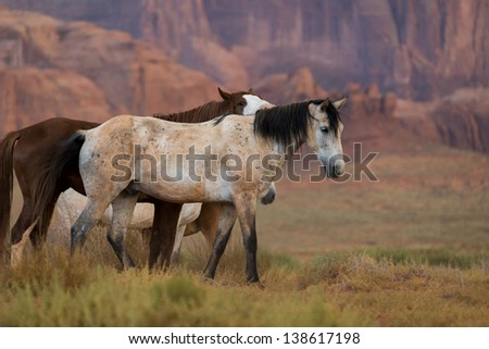Wild horses in Monument Valley, Arizona, USA - stock photo