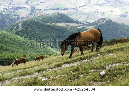 Wild horses in the pasture of a Monte Cucco national park, Italy