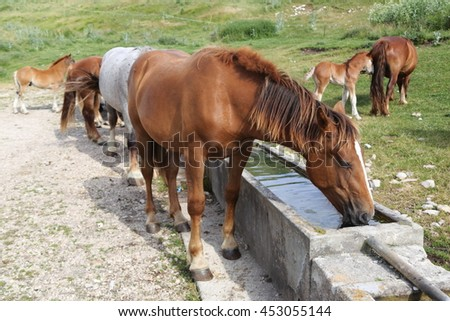 wild horses mountains national park sibillini Italy