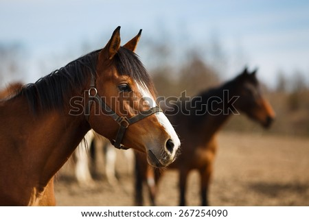 Wild horses on the meadow at spring time - stock photo