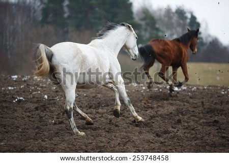 Wild horses on the meadow at winter time - stock photo