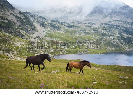 Wild horses running free in the mountains