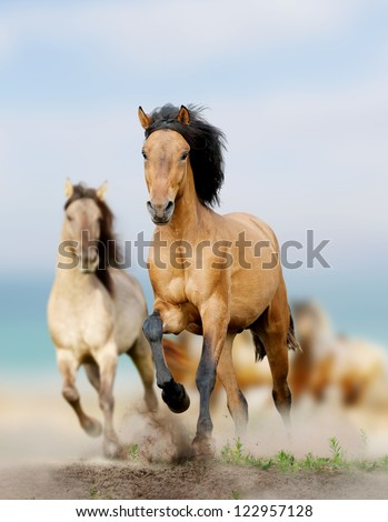 wild horses running in dust - stock photo