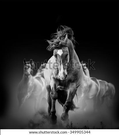 wild horses running in the dark in dust - stock photo