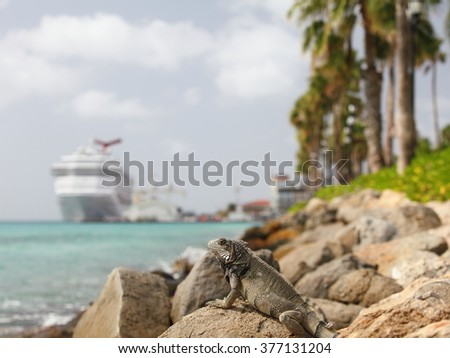 Wild iguana at the Aruba island, Caribbean sea