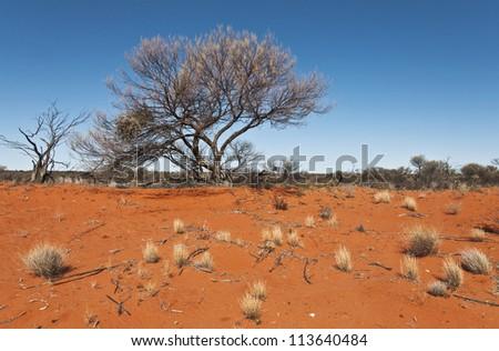 wild landscape in the australian outback, south australia - stock photo