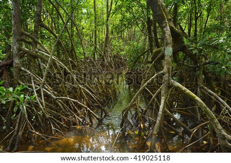 Wild landscape of Australian mangroves in Daintree National Park in the tropical north of Queensland, Australia - stock photo
