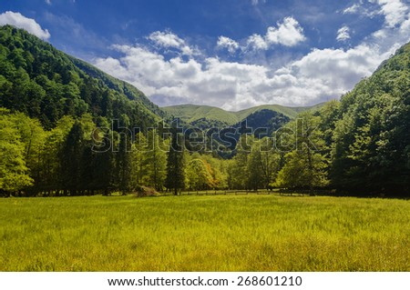 wild landscape with forest and meadow - stock photo