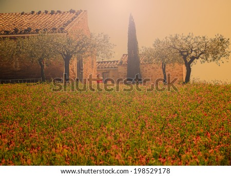 Wild lavender field and old farmhouse, olive trees and cypress  in Provence (France). Sunlight. Aged photo. - stock photo