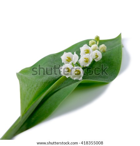 wild Lily of the valley  isolated on white, paths - stock photo