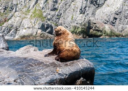 Wild male Sea lion in Kamchatka Peninsula, Russia. Coast of The Pacific Ocean - stock photo