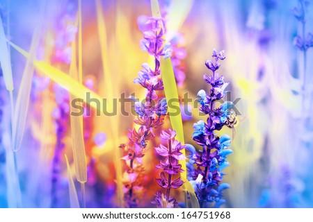Wild meadow flowers - stock photo