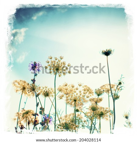 wild meadow flowers and grass vintage style background    - stock photo
