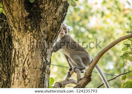 Wild monkey in a tree Are viewed with suspicion.