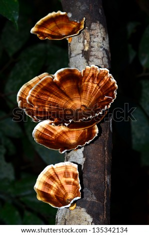 Wild mushroom on mossy trunk in the forest - stock photo