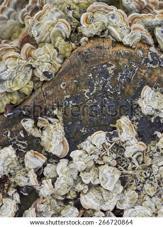 wild mushrooms grow on bark tree  - stock photo