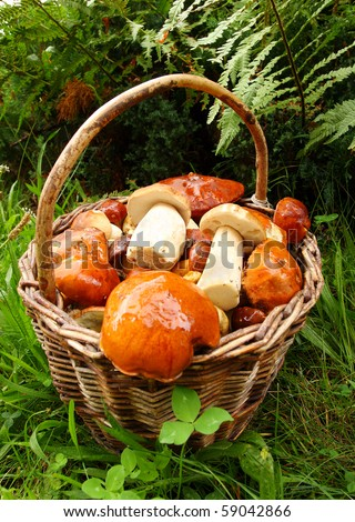 Wild mushrooms in basket. Close up with shalow DOF. - stock photo