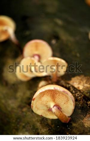 Wild Mushrooms on the tree - stock photo