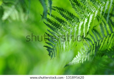 Wild nature - Green fronds close-up in sunny forest - stock photo