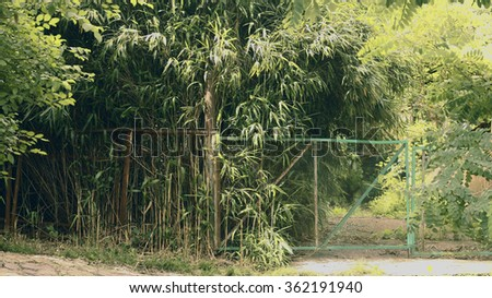 Wild nature is fascinating jungle, somewhere in the mountains, the village subtropics Dederkoy. Thickets of wild bamboo for the metal wall