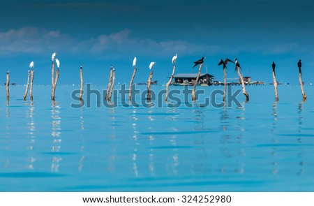 Wild ocean bird sits on wood in the middle of ocean - stock photo