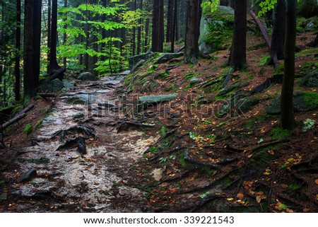 Wild path covered with tree roots and rocks in the mountain forest, Karkonoski National Park, Poland.